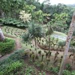 Vue_aerienne_du_jardin_de_balata